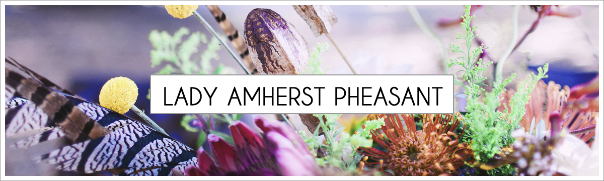 lady-amherst-header-picture-edited-1.jpg