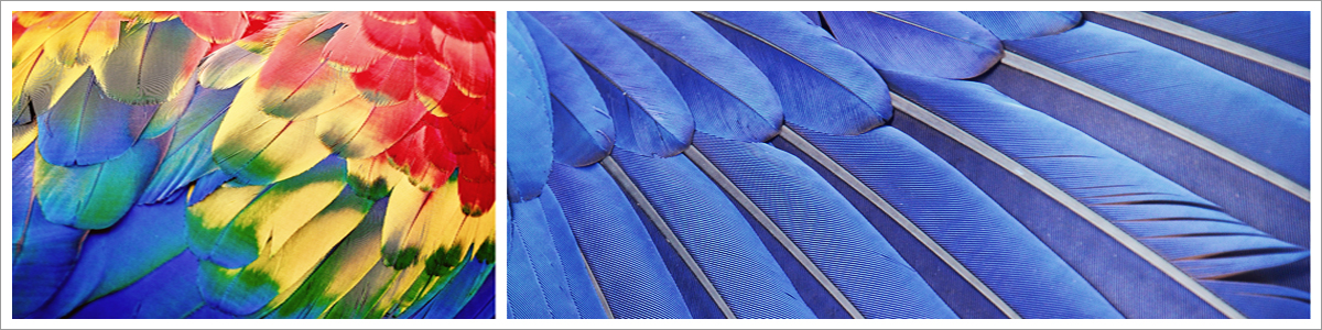 macaw-exotic-header-picture.jpg