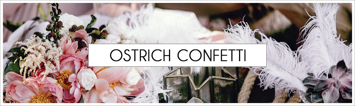 ostrich-confetti-header-picture-edited-1.jpg