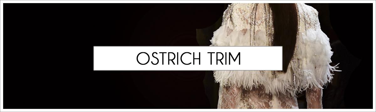 ostrich-trim-header-picture-edited-1.jpg