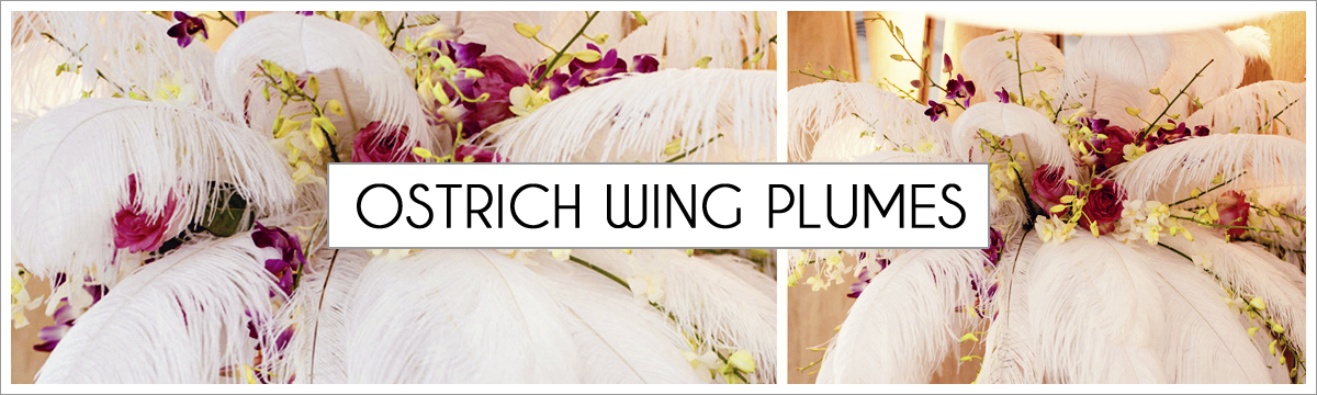 ostrich-wing-plumes-header-picture-edited-1.jpg