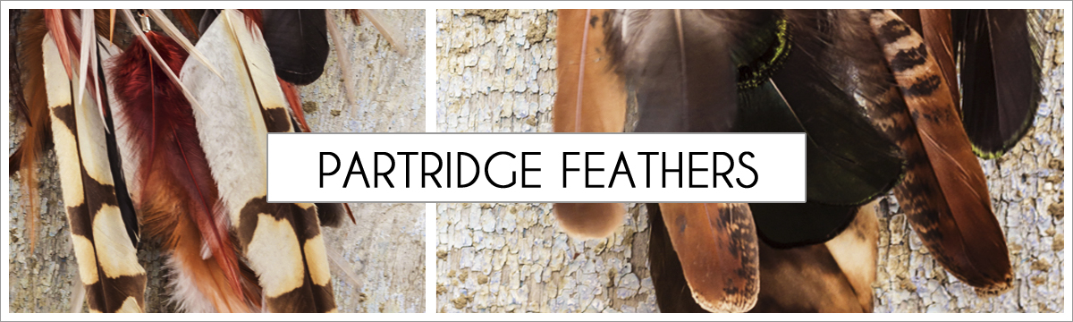 partridge-header-picture-edited-1.jpg