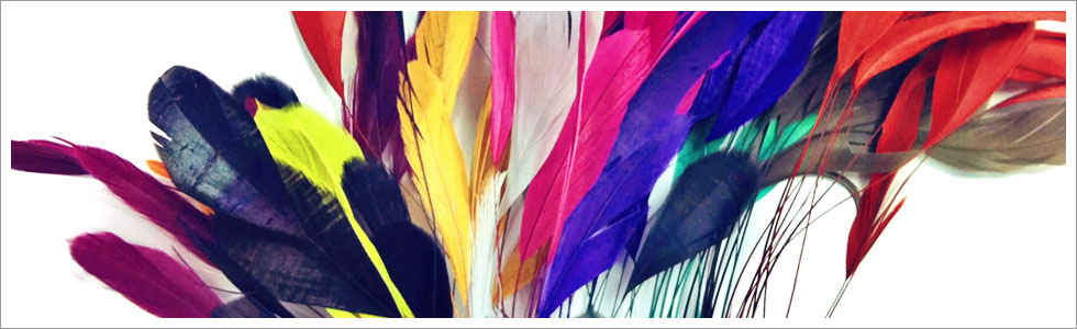 stripped-coque-tail-header-picture2.jpg