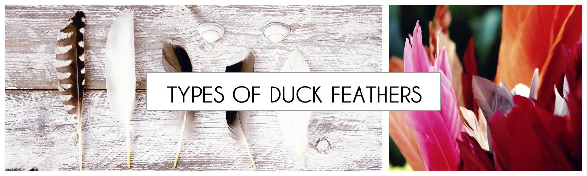 types-of-duck-main-header.jpg