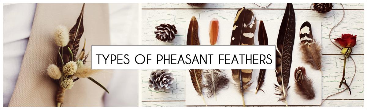types-of-pheasant-header-picture-edited-1.jpg