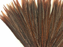 "10 Pieces - 10-12"" Natural Golden Pheasant Tail Feathers"