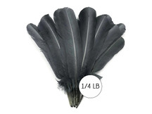 1/4 Lb - Silver Gray Turkey Tom Rounds Secondary Wing Quill Wholesale Feathers (Bulk)