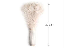 """100 Pieces - 30-35"""" Bleached Ivory Peacock Tail Eye Wholesale Feathers (Bulk)"""