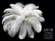 "1/2 Lb - 19-24"" Off White Ostrich Extra Long Drab Wholesale Feathers (Bulk)"