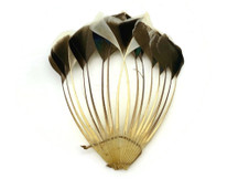 1 Piece - Natural Brown Stripped Duck Cochette Center Fan Feather Pad