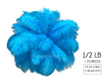 "1/2 Lb - 19-24"" Turquoise Ostrich Extra Long Drab Wholesale Feathers (Bulk)"