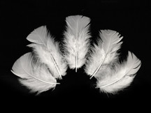 1/4 Lb - White Turkey T-Base Wholesale Body Plumage Feathers (Bulk)