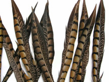 "10 Pieces - 8-10"" Natural Lady Amherst Pheasant Tail Feathers"
