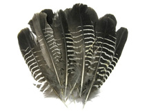 10 Pieces - Black And White Partridge Wing Feathers