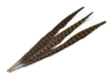 "10 Pieces - 20-26"" Natural Long Ringneck Pheasant Tail Feathers"