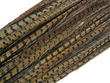 "50 Pieces - 20-26"" Natural Ringneck Pheasant Tail Wholesale Feathers (Bulk)"