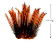 10 Pieces - Orange Dyed BLW Laced Long Rooster Cape Whiting Farms Feathers