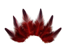 10 Pieces - Red Jungle Cock Loose Plumage Feather