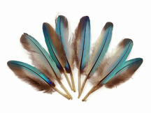 10 Pieces - Natural Light Blue Common Kingfisher Mini Wing Feathers