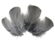 1/4 Lb - Grey Turkey T-Base Wholesale Body Plumage Feathers (Bulk)