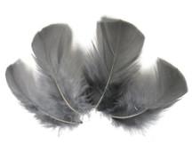 1/4 Lb - Grey Turkey T-Base Wholesale Body Plumage Feathers (Bulk)