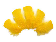 1/4 Lb - Golden Yellow Turkey T-Base Wholesale Body Plumage Feathers (Bulk)