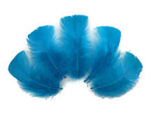 1/4 Lb - Turquoise Blue Turkey T-Base Wholesale Body Plumage Feathers (Bulk)