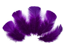 1/4 Lb - Purple Turkey T-Base Wholesale Body Plumage Feathers (Bulk)
