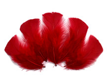 1/4 Lb - Red Turkey T-Base Wholesale Body Plumage Feathers (Bulk)