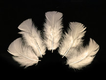 1/4 Lb - Ivory Turkey T-Base Wholesale Body Plumage Feathers (Bulk)
