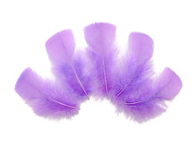 1/4 Lb - Lavender Turkey T-Base Wholesale Body Plumage Feathers (Bulk)