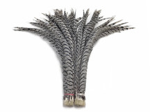 "10 Pieces - 25-30"" Natural Zebra Black And White Lady Amherst Pheasant Tail Super Long Feathers"
