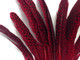 Bright red dyed spotted large feathers