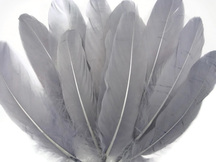 Gray dyed sturdy craft feathers
