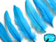 Light blue fluffy goose feathers