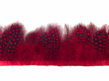 Red Guinea Hen Plumage Feather Trim