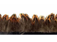 1 Yard - Pointed Ringneck Pheasant Plumage Feather Trim