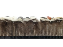 White and brown natural colored pheasant feather strip