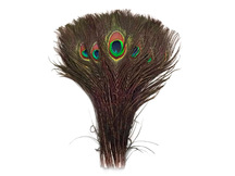 "10-12"" Natural Peacock Tail Eye Wholesale Feathers (Bulk)"