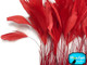 Red Stripped Coque Tail Feathers Wholesale (Bulk)