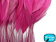 Hot Pink Stripped Coque Tail Feathers Wholesale (Bulk)