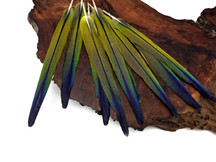 4 Pieces - Tri Color Ombre Conure Parrot Pointed Tail Feathers - Rare-