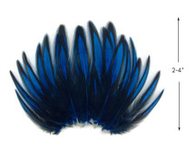 1 Dozen - Kingfisher Blue Whiting Farms BLW Laced Hen Cape Loose Feathers