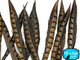 Brown and black patterned craft feathers
