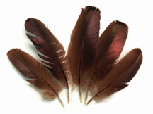 Brown bronze high quality turkey wing feathers can be used for dream catchers, costumes, cosplay, and decor.