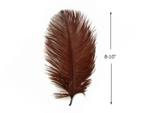 "10 Pieces - 8-10"" Brown Ostrich Dyed Drabs Feathers"