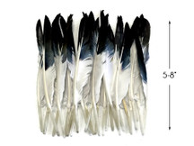 1 Pack - Black Tipped Duck Primary Wing Pointer Feathers 0.50 Oz.