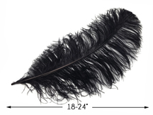 "10 Pieces - 18-24"" Black Large Prime Grade Ostrich Wing Plume Centerpiece Feathers"