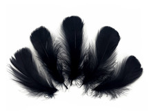 "1/4 Lb - 2-3"" Black Goose Coquille Loose Wholesale Feathers (Bulk)"