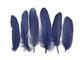 Dark blue soft sleek quill tip feathers